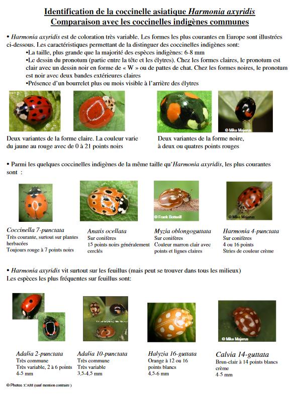 2012 02 15 coccinelles pdf