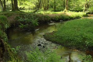 2012 09 river 364867 pixabay